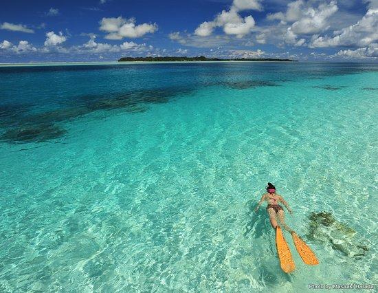 Palau: 寒い日本を抜け出して、あったか~い南の島でシュノーケリング💙  #マリンダイビング #marinediving #lascuba #ラスクーバ #diving #scubadiving #underwaterphoto #ダイビング #スクーバダイビング #水中写真