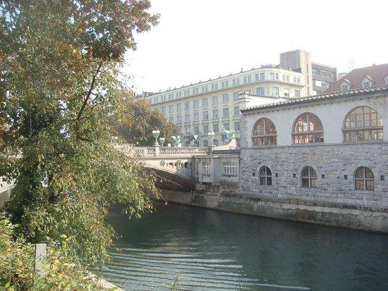 Puente de los Dragones: вид на мост с набережной реки