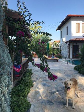 Zdjęcie Akcapınar