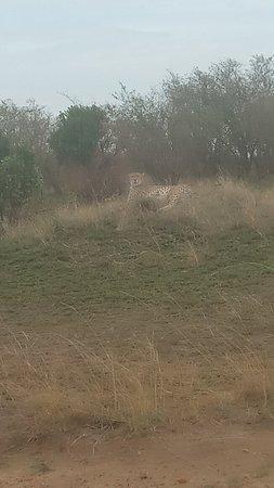 Masai Mara adventure by Kenya tour budget safari