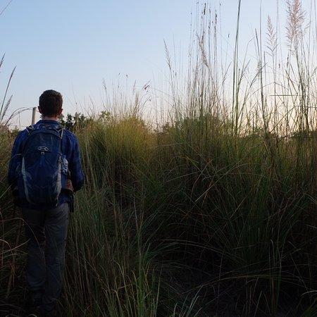 Amazing walking safari
