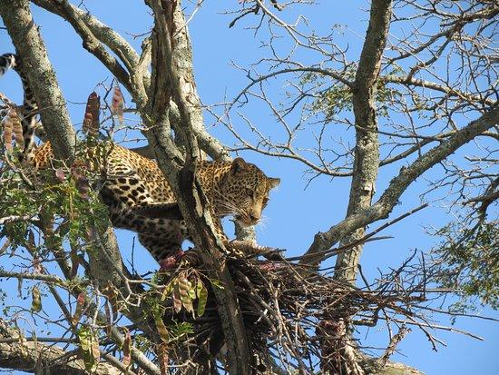 Kudu Hills Safaris