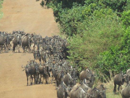The Kudu Way