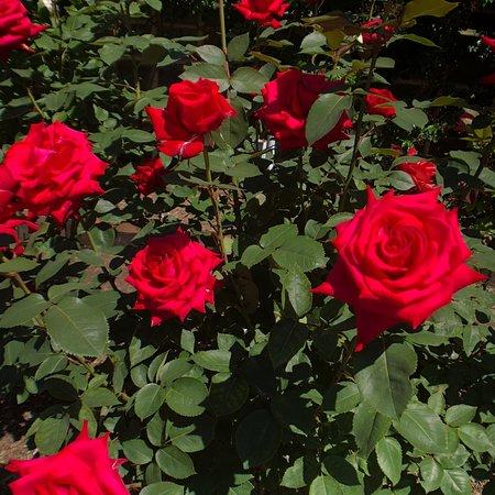 Ishida Rose Garden