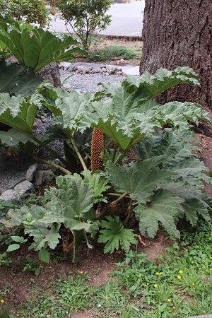 Lots of interesting plants