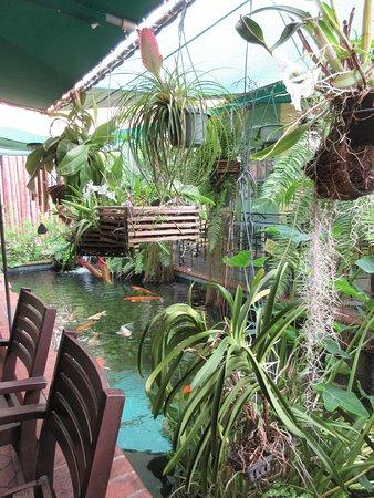 Nice garden area/koi pond