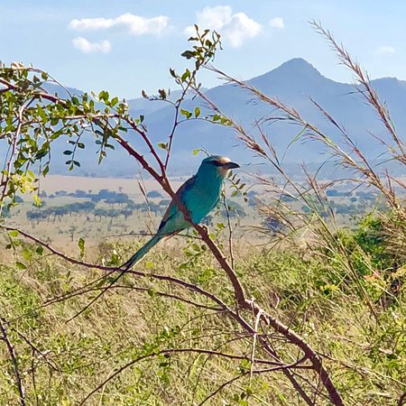 Kidepo Valley National Park Photo