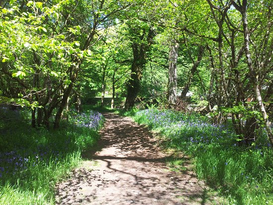 Manons Riverside Cafe: Why not walk of lunch with a stroll along the Tryweryn Trail?