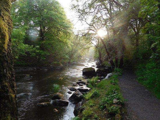 Manons Riverside Cafe: Take a walk along the Tryweryn Trails riverside path