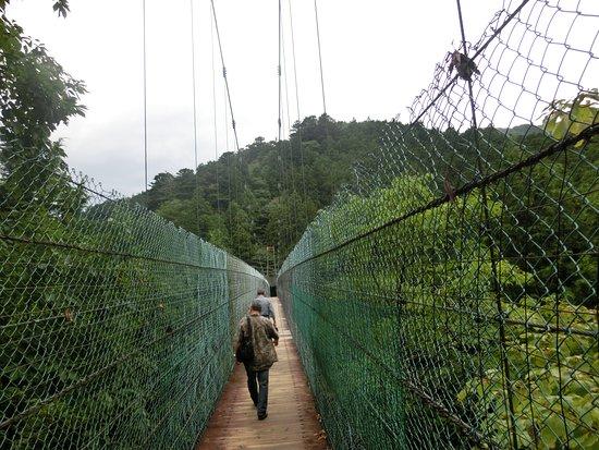Tenkawa-mura, ญี่ปุ่น: かりがね橋を渡ります。