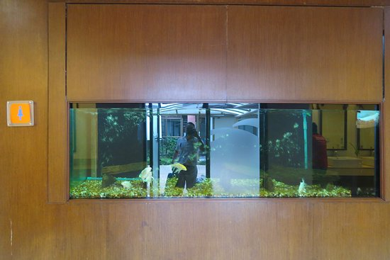 Bangkok Airways: ห้องน้ำภายในสนามบินที่นี่กว้างมาก อีกทัังยังมีตู้ปลาด้วยครับ