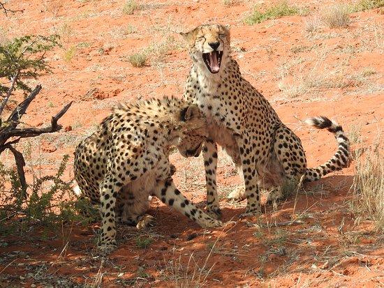 Tswalu Kalahari Game Reserve Photo