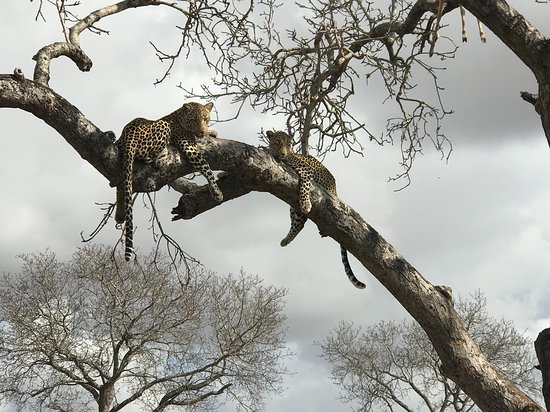 Londolozi Private Game Reserve Foto