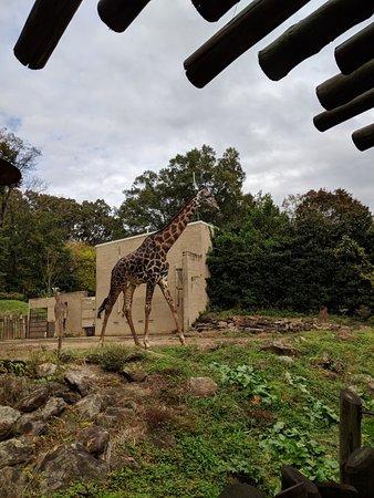 Greenville Zoo Photo