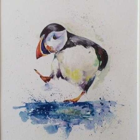 The Wee Puffin Photo