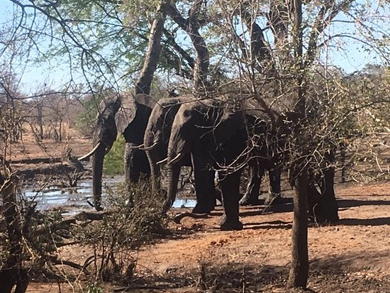 Manyeleti Game Reserve, Južna Afrika: Great view from our tent!  Right by a watering hole!