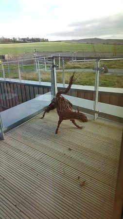 Willow animal hunt