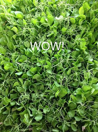 Micro greens fresh from the farm!