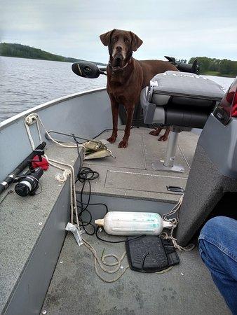 Bilde fra Elk Lake