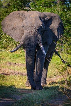Zdjęcie Tembe Elephant Park