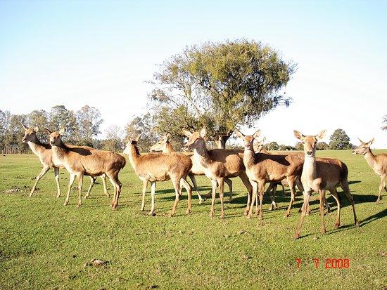 Foto de Pampas Safari