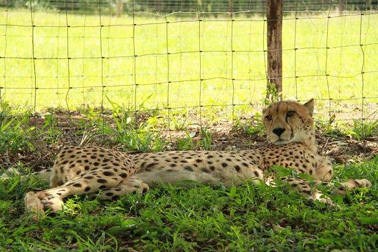 Bilde fra Hluhluwe Game Reserve