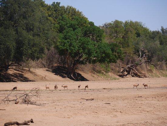 Northern Tuli Game Reserve Φωτογραφία