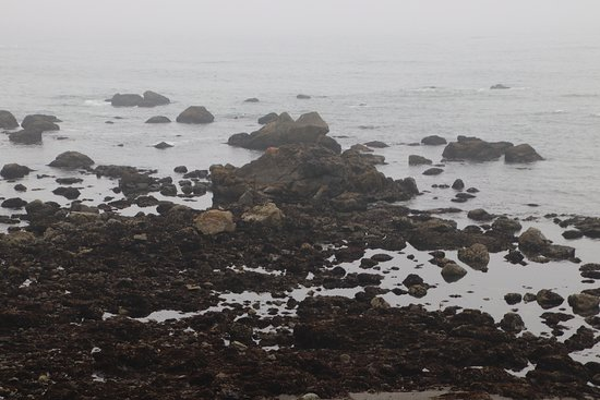 McVay Rock State Recreation Site: There was truly lots of rocks on the ocean
