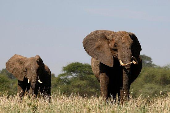 Zepisa African Safaris