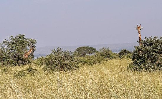Murchison Falls National Park Photo