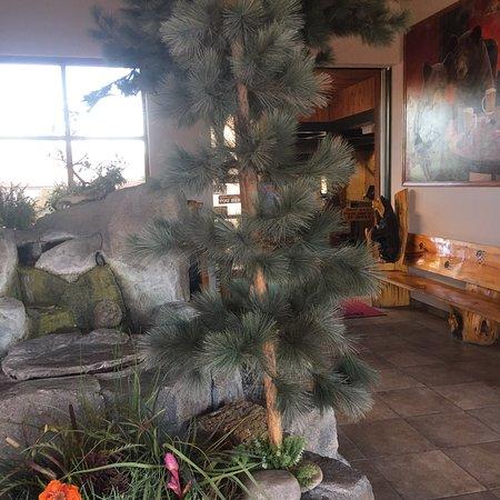 black bear diner fernley restaurant avis num ro de. Black Bedroom Furniture Sets. Home Design Ideas