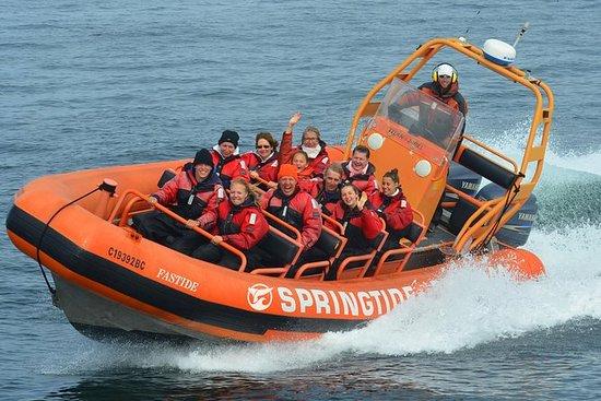 Meerestier-Tour im Zodiac-Schlauchboot