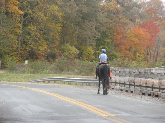 Queen Anne, MD: You might see this horse along the park street