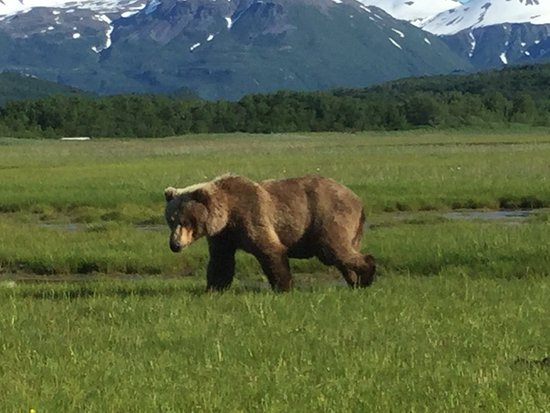 Katmai Adventure Lodge Picture
