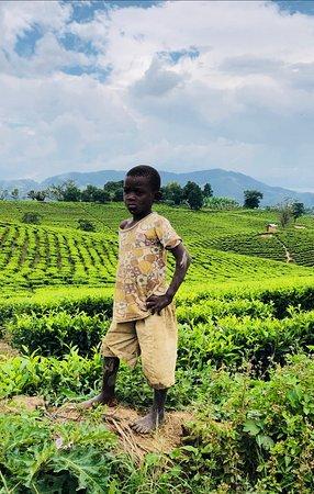 Uganda es un país de paisajes soberbios. Sin embargo uno de los más bellos está creado por el hombre: son las plantaciones de té que crecen por encima de los 1.500 metros. Perfectas campiñas hechas con tiralíneas que parecen alfombras o campos de futbol. El centro del cultivo de té ugandés está en Fort Portal.