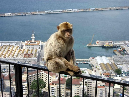 Gibraltar Sightseeing