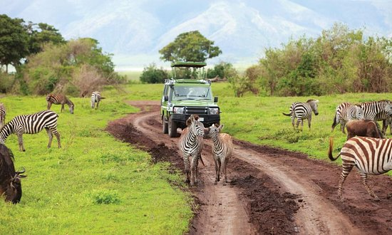 ‪Travel Partners Safaris‬