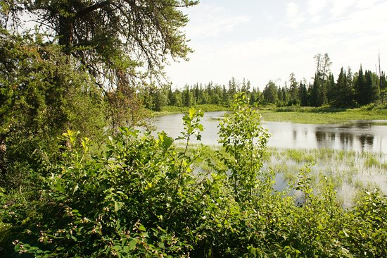 Whiteshell Provincial Park, Canada: Everything's so green!