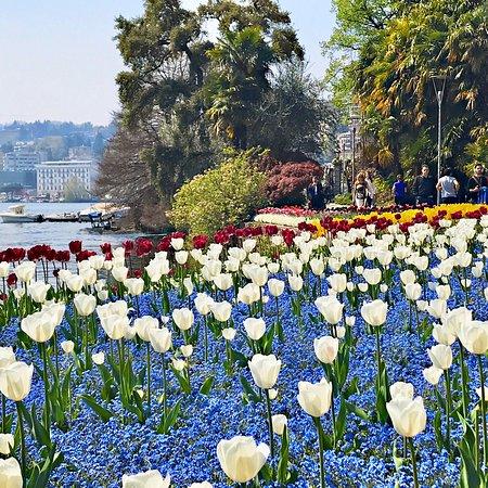 Bellissimo parco in riva al lago da visitare soprattutto in primavera dove le aiuole sempre molto curate si riempiono di mille colori!