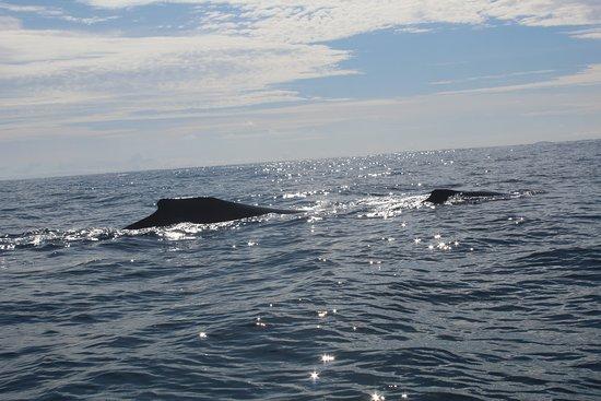 Golfo de Chiriqui National Park Photo