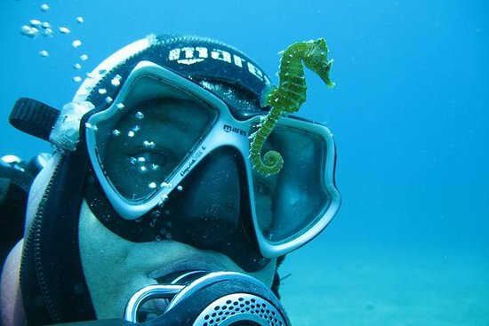 Scuba Diving from Split,Trogir, or...
