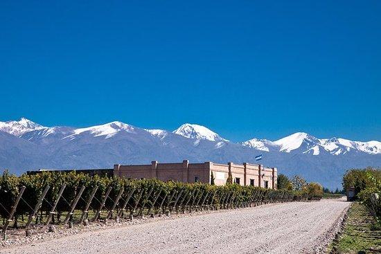 Skjulte vingårder i Uco-dalen