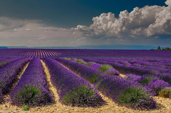 Lavendel-Tour in einer kleinen Gruppe...