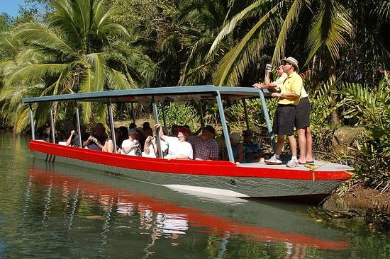 Damas Island Mangrove Boat Tour from...