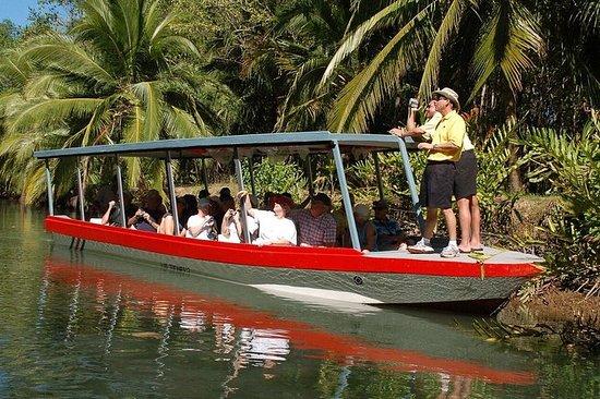 Excursão de barco pelo mangue de...