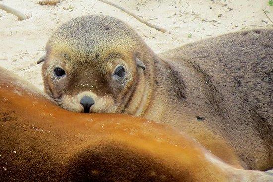 Overnatting Kangaroo Island Wildlife...