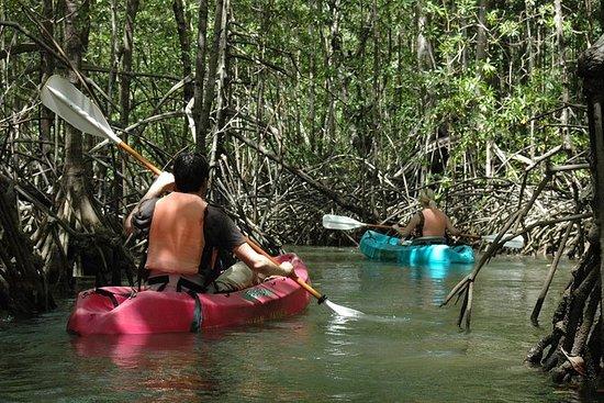 Damas Island Mangrove Kayaking Tour ...
