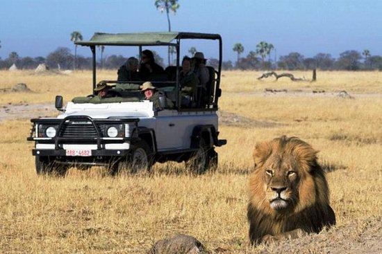 Safari en camping de 2 jours dans le...