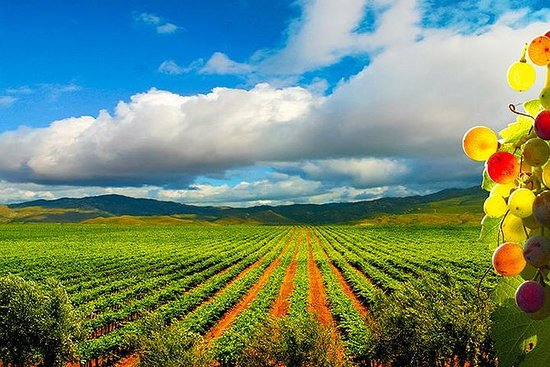 Guadalupe Valley Wine Route Tour i...