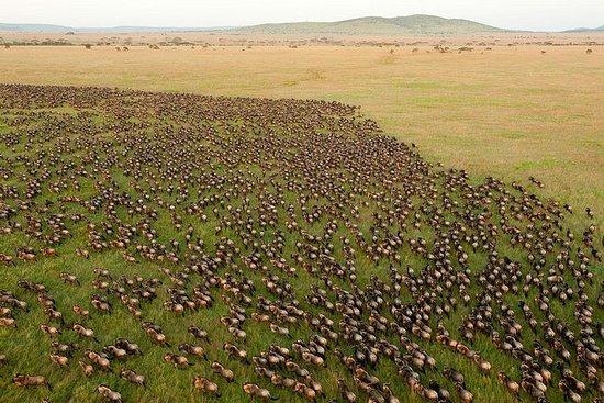 アルーシャの10日間のタンザニア野生動物サファリ